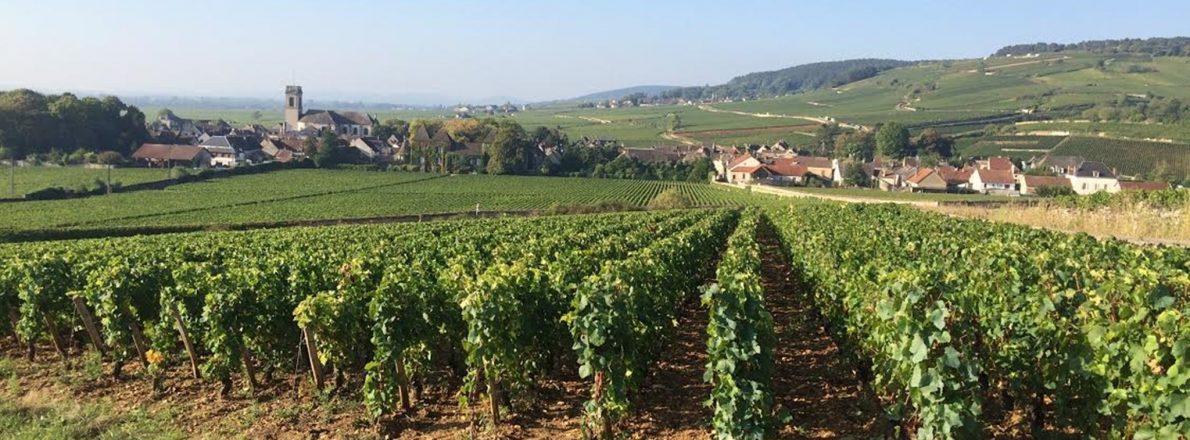 Charmot de Pommard - Vines